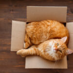 Pet relocation for expatriates