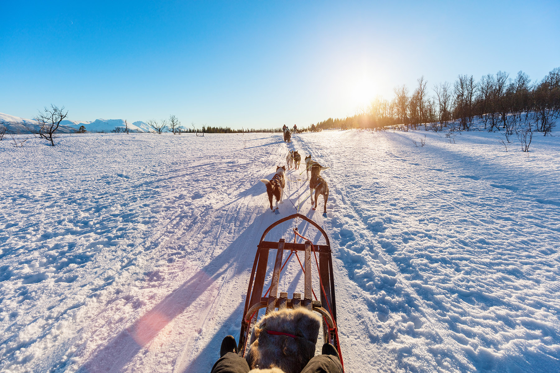 Sledding with husky dogs in Norway