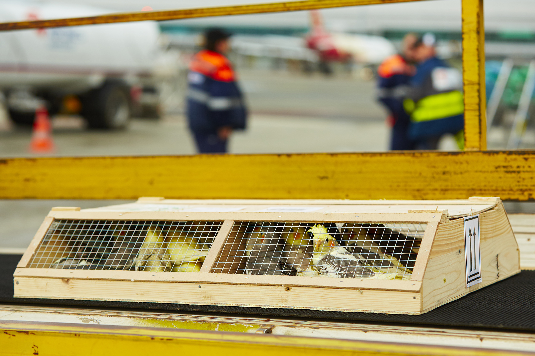 Bird crates waiting to be loaded at an airport