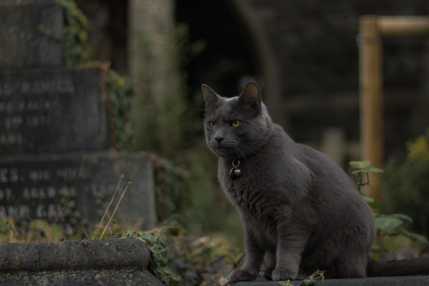 Black cat in a graveyard