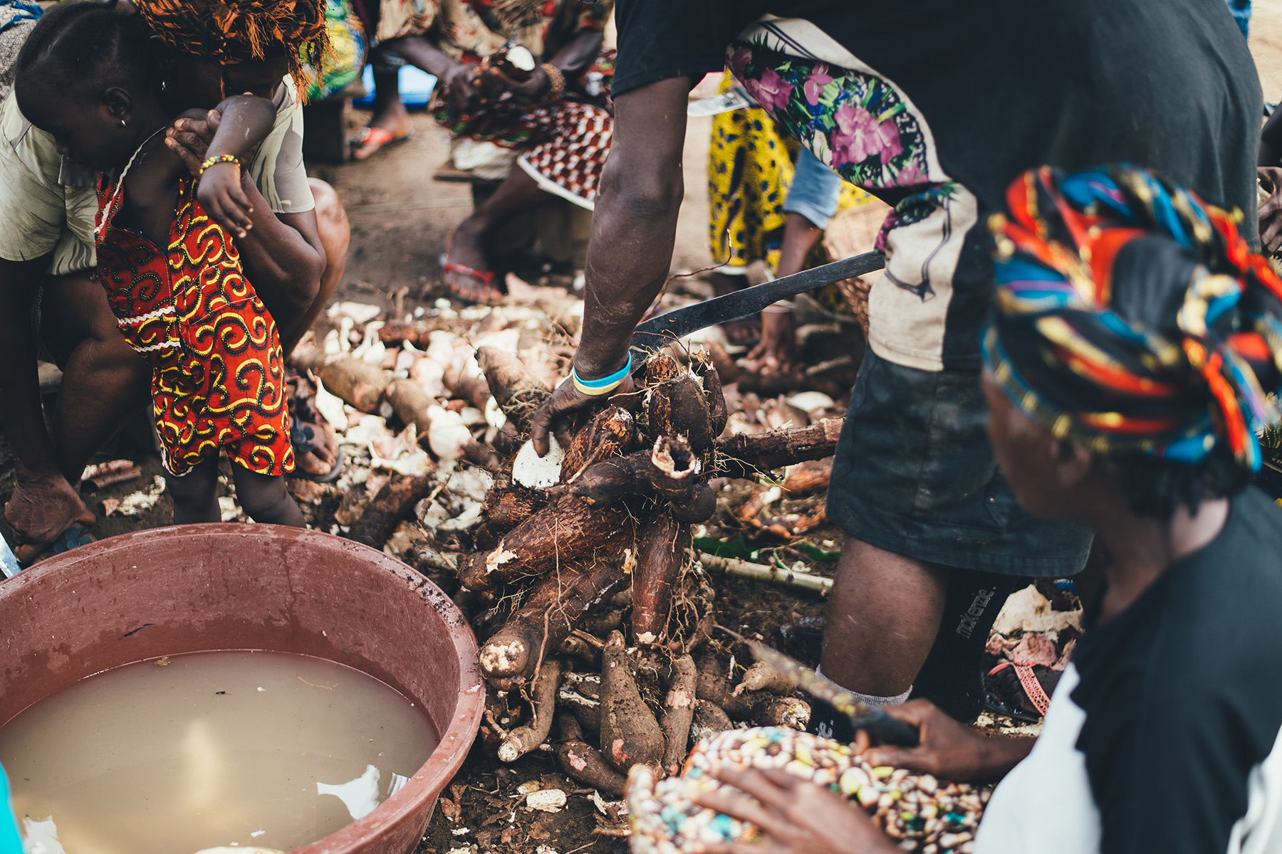 A harvest of cassava in Sierra Leone
