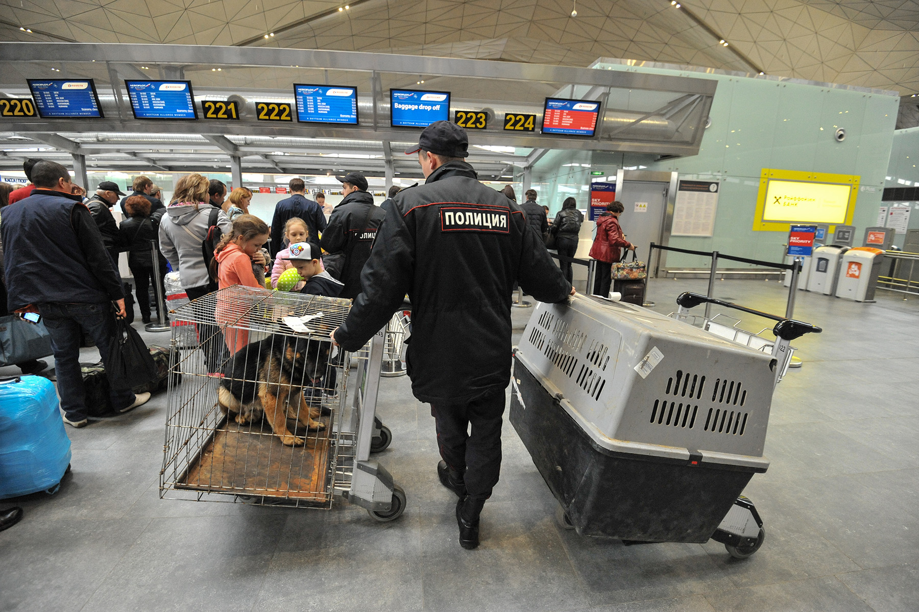 Dog crates at an airport check-in desk