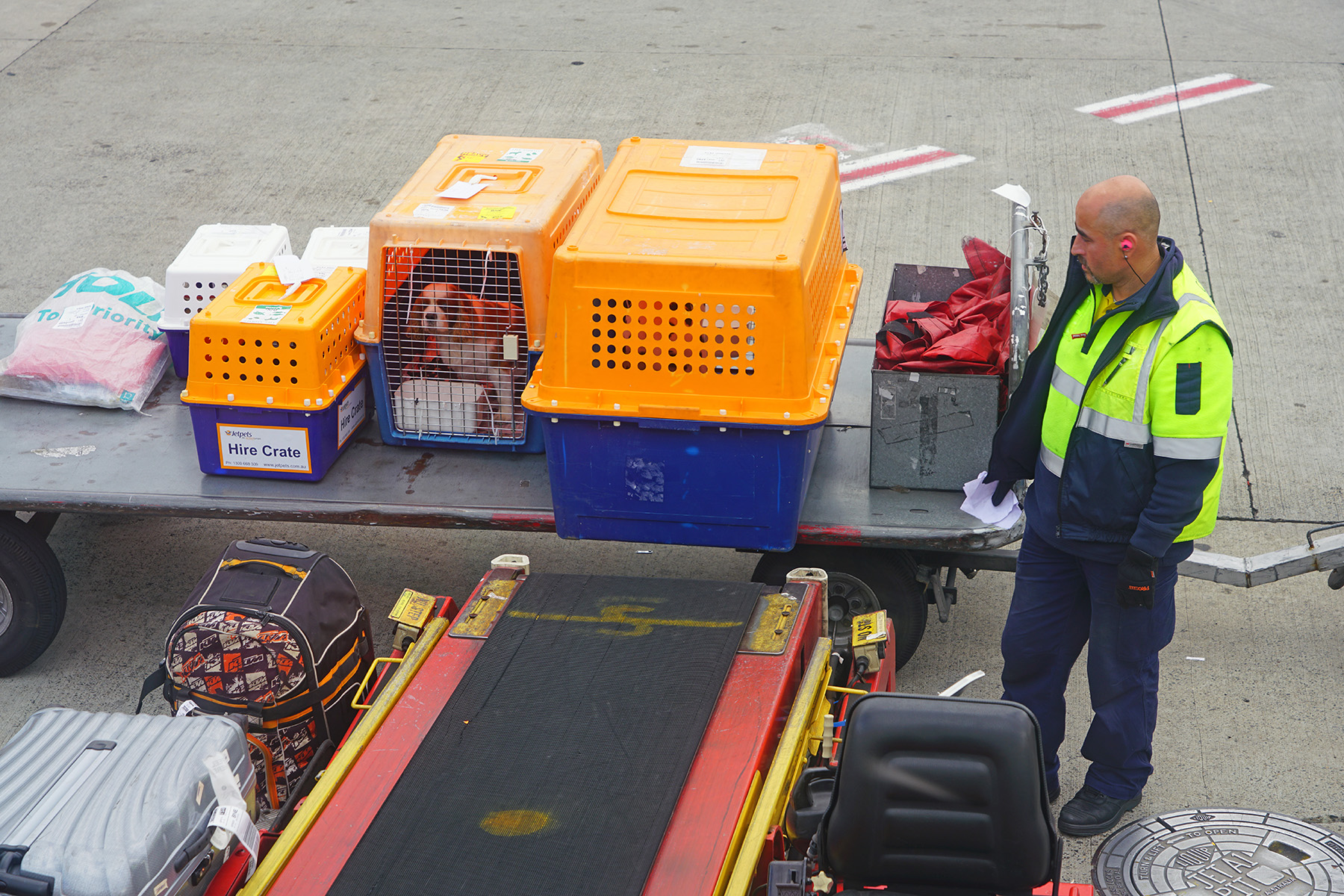 Loading pet crates onto an airplane