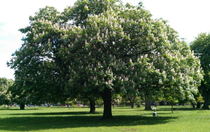 living in Islington - Clissold Park