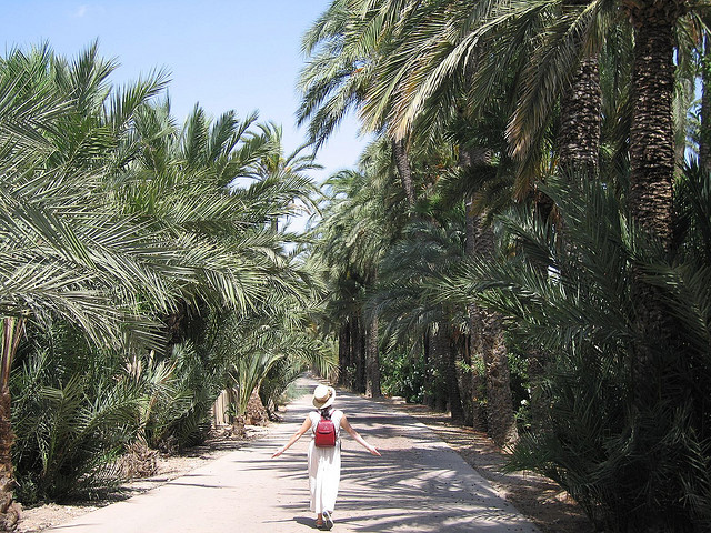 Top UNESCO sites Spain: Palmeral of Elche