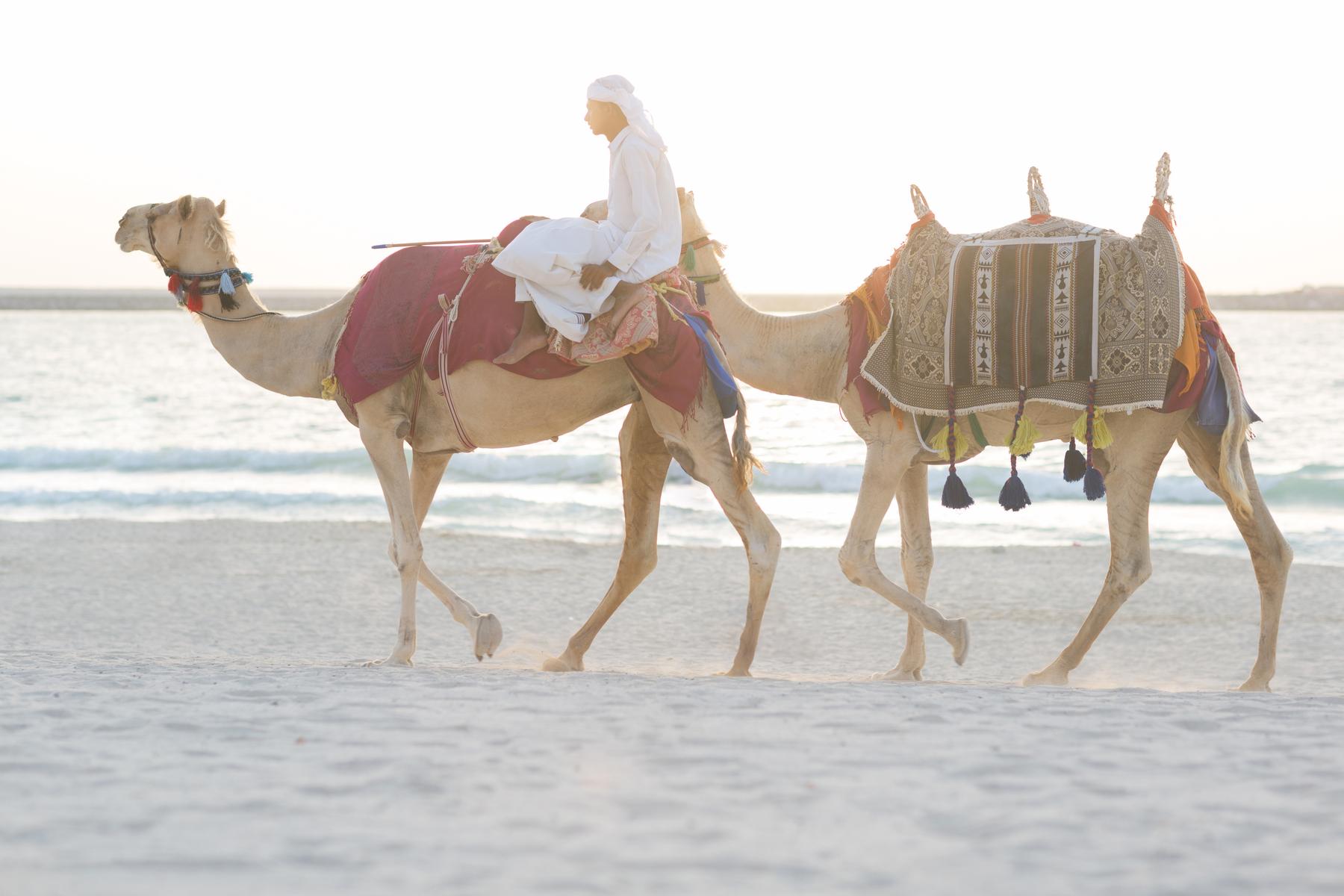 Arabian nomad