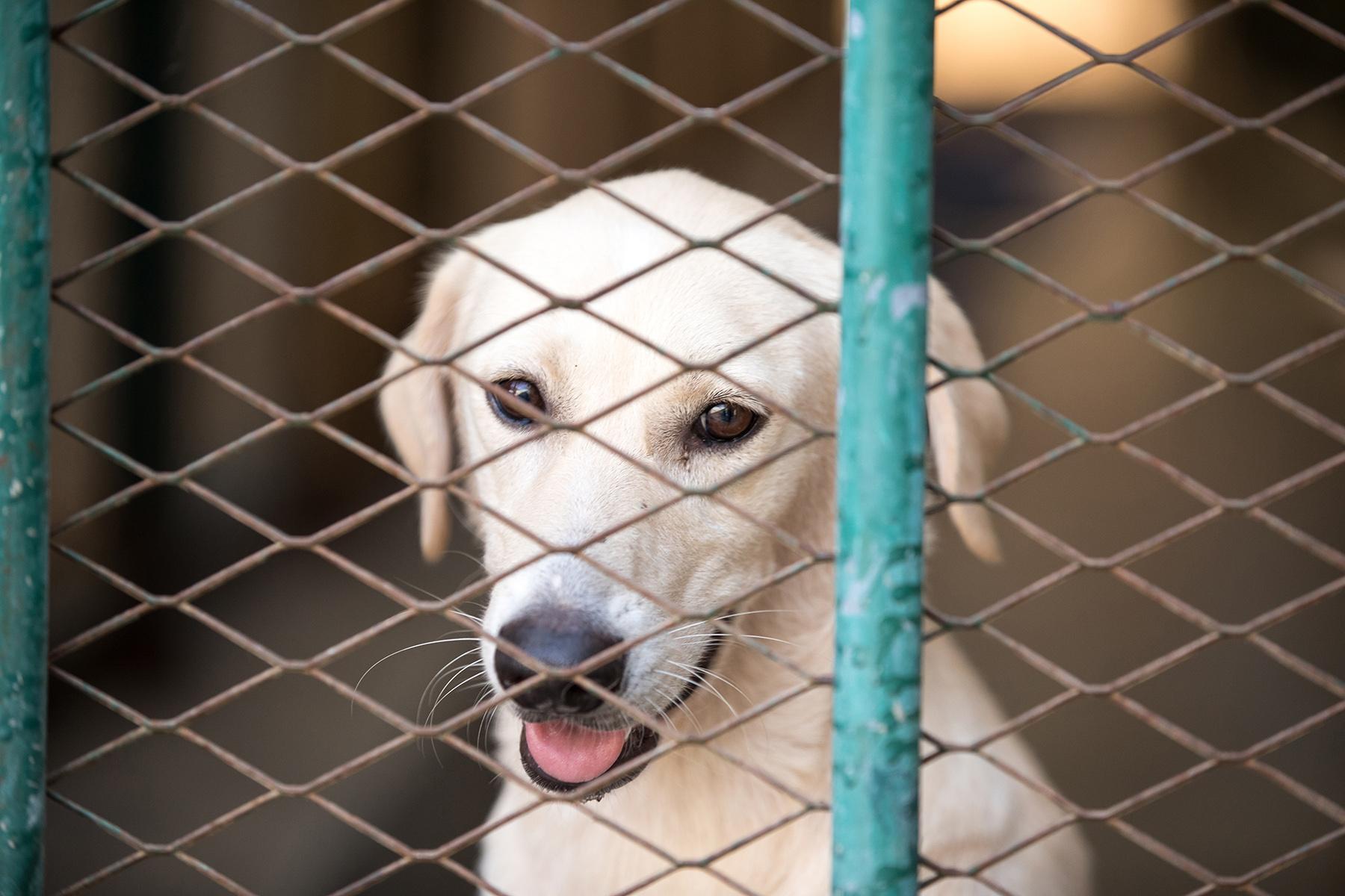Dog at an animal shelter