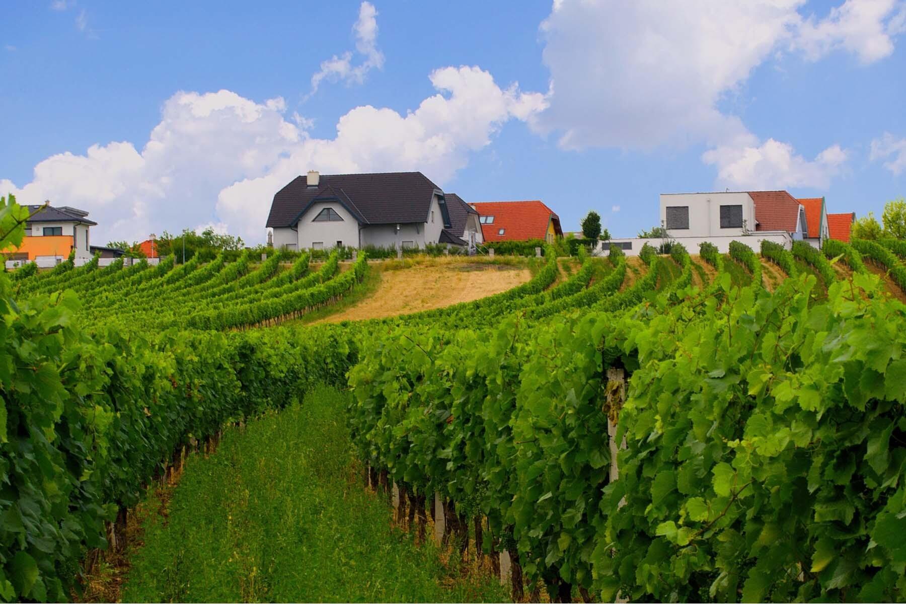 vineyards austria facts