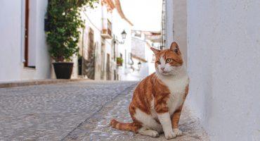 Bringing pets to Spain