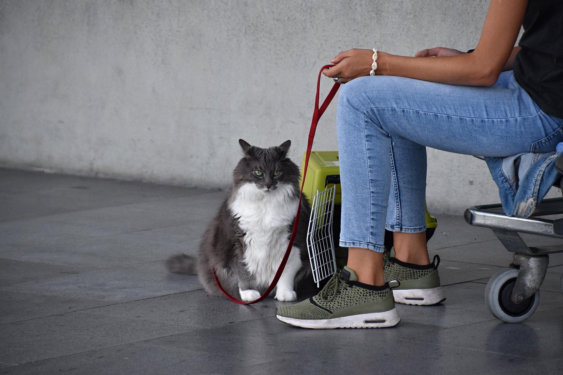 A cat at an airport