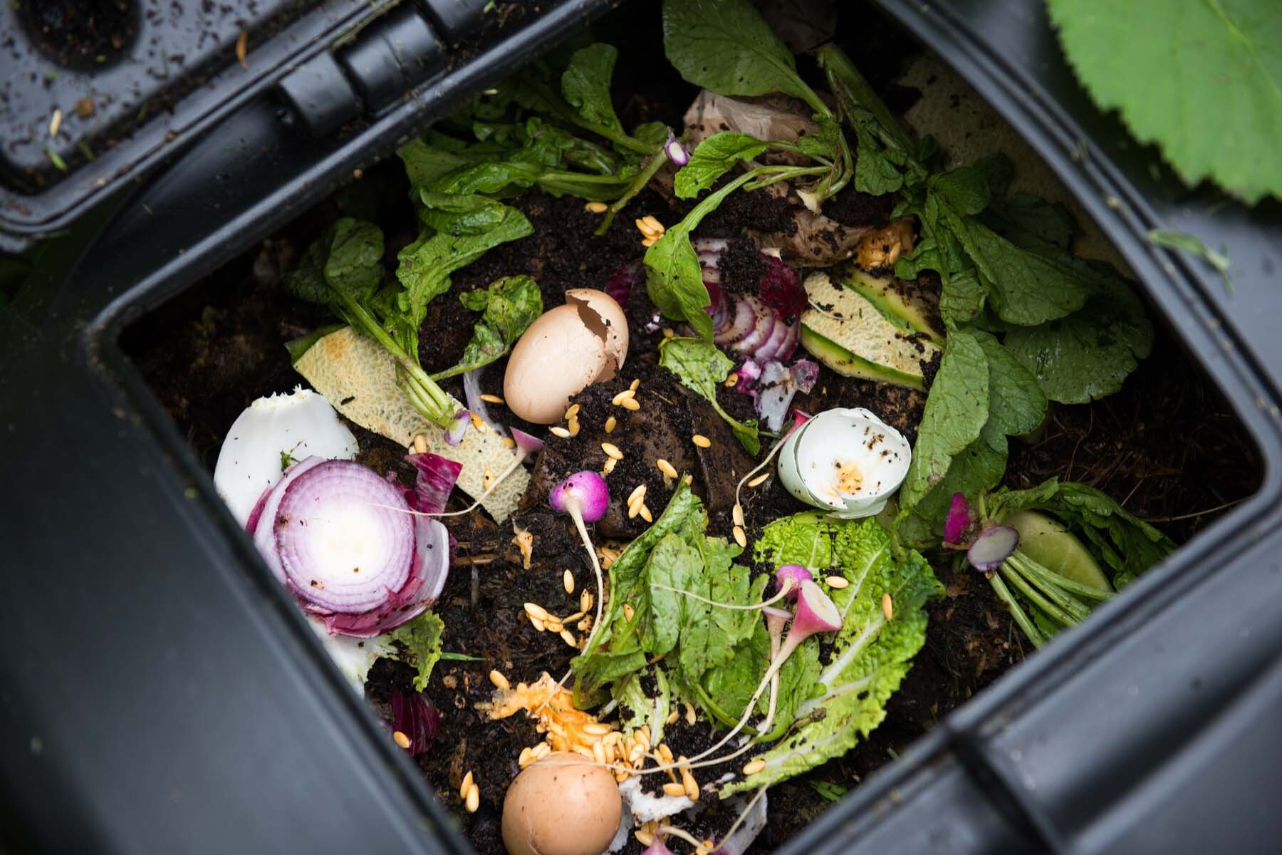 dutch food composting