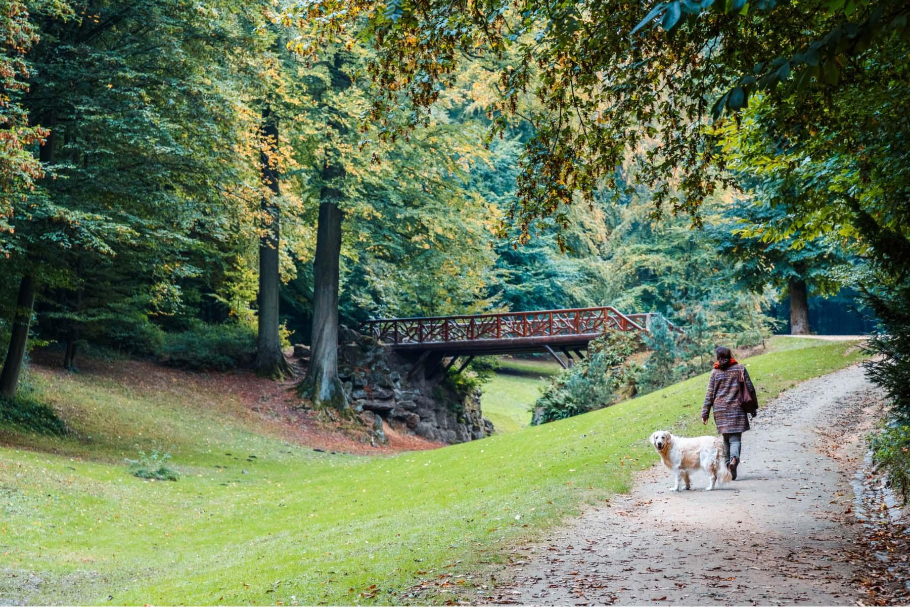 dogs in Belgium