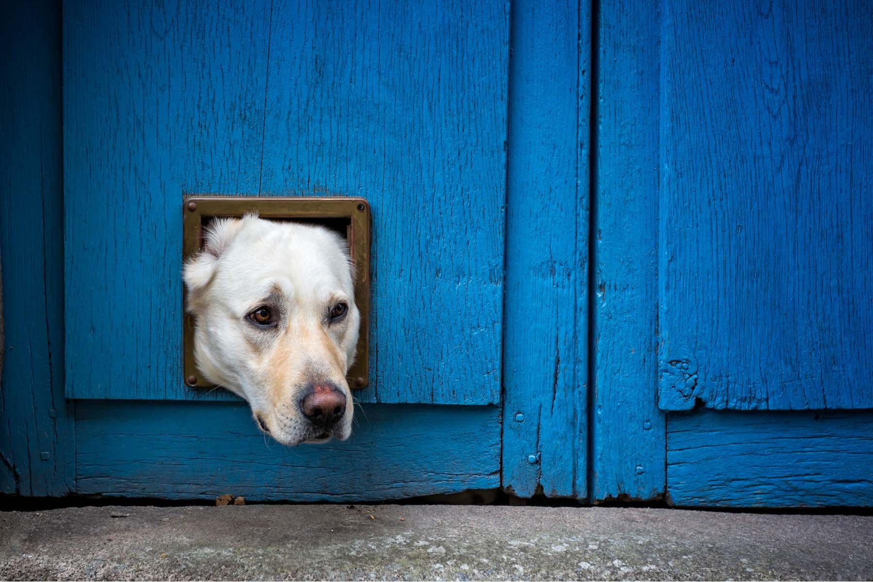 dog in France