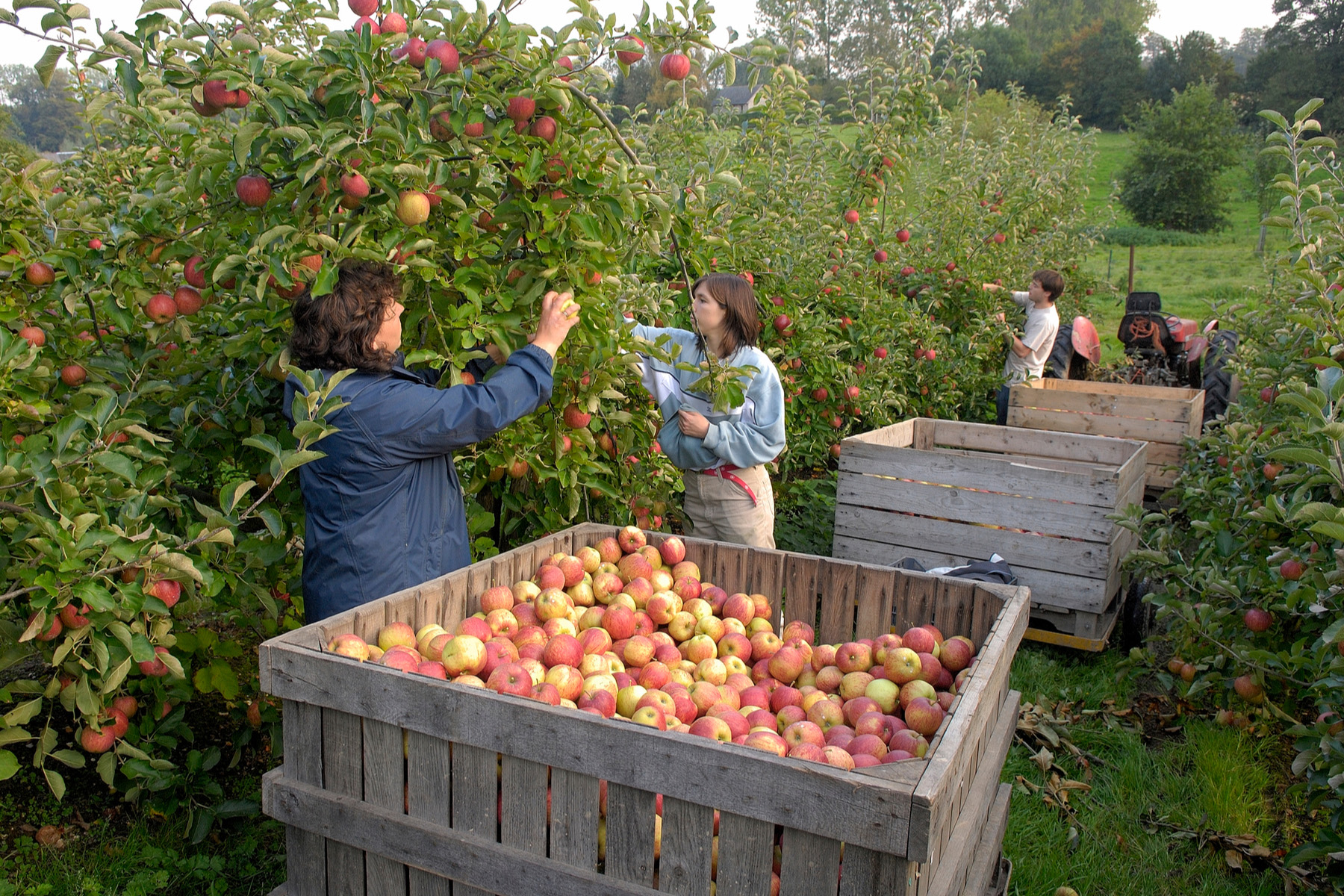 Temporary agricultural workers in France