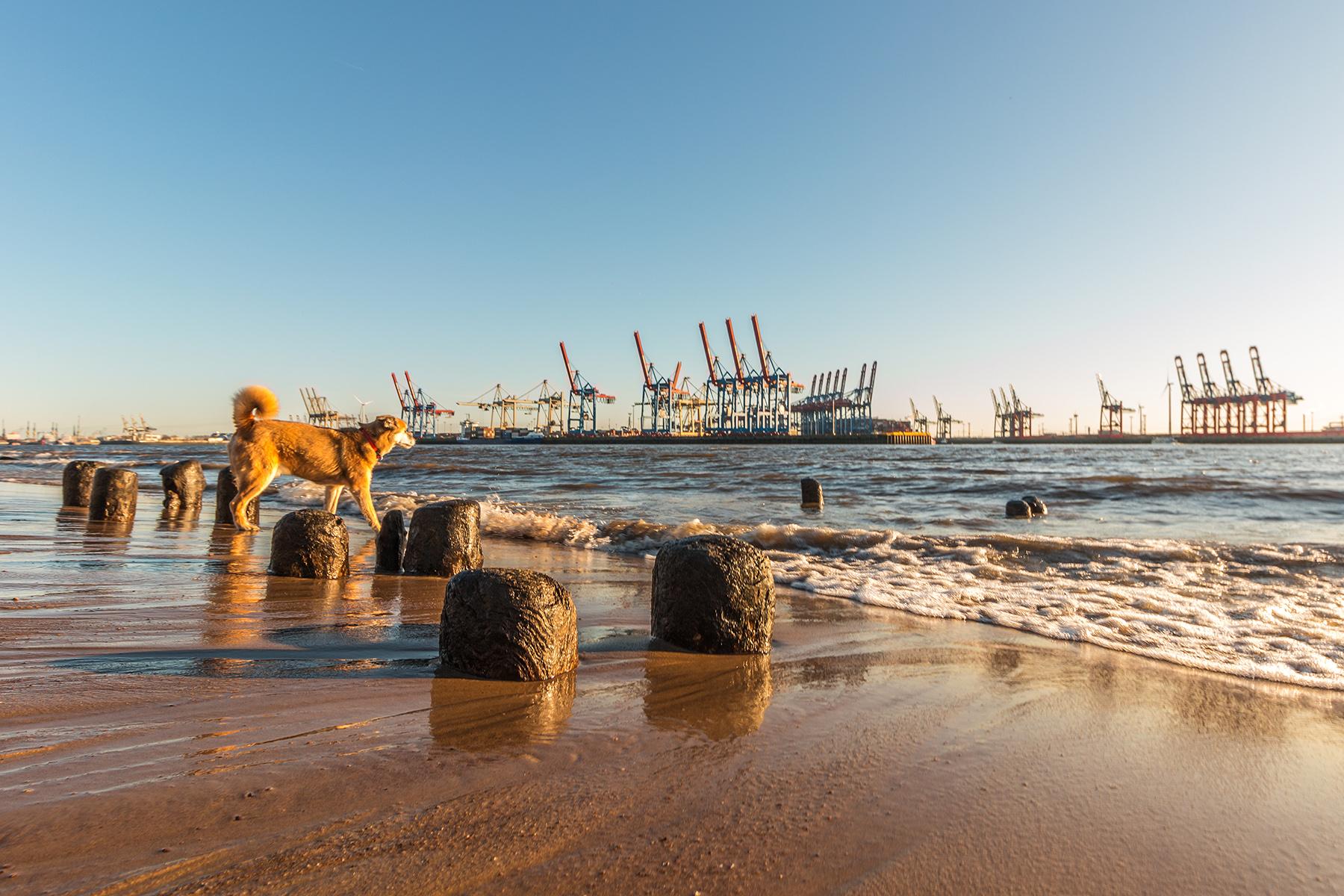 A dog playing on a beach in Hamburg