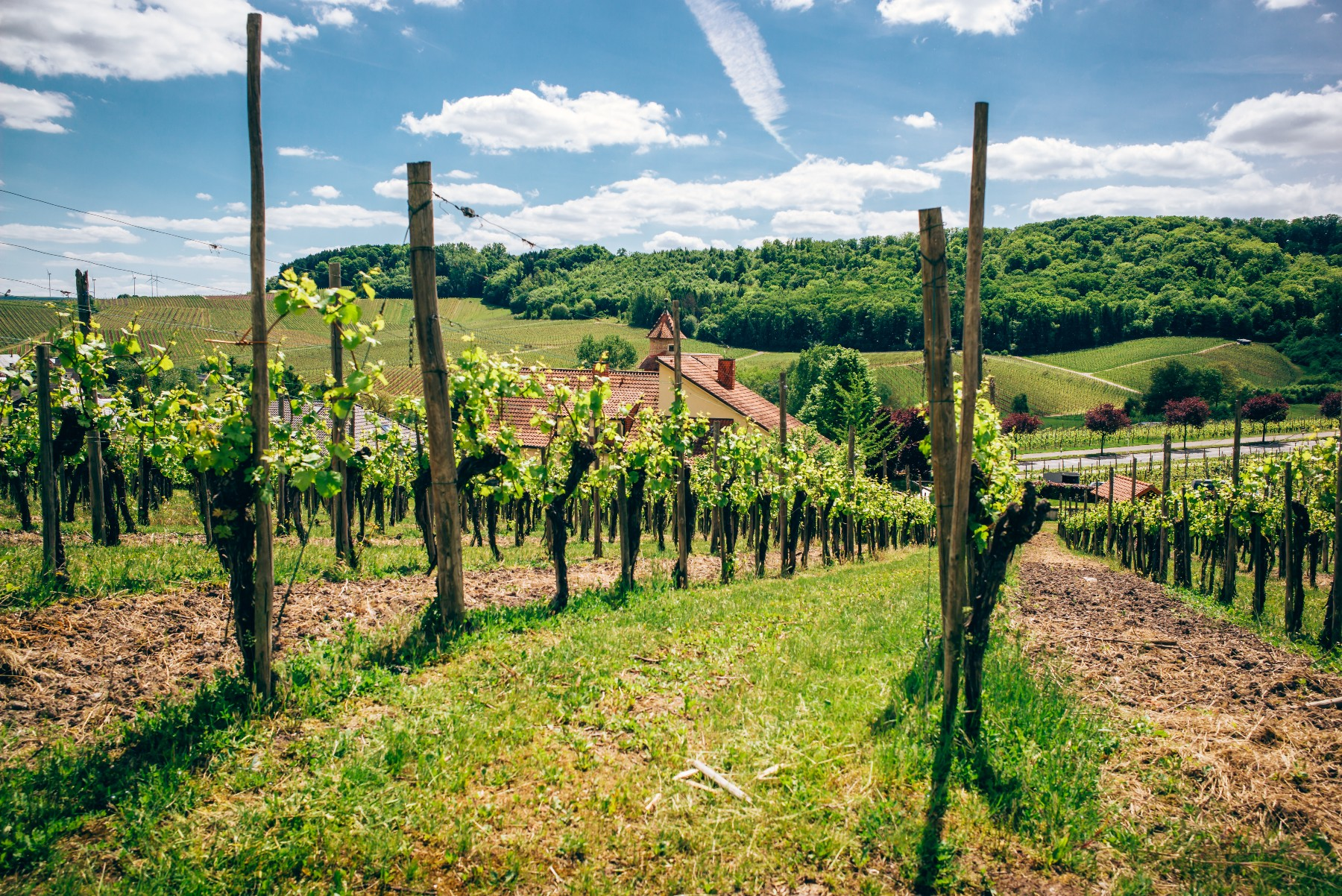 Moselle valley vineyards of Luxembourg