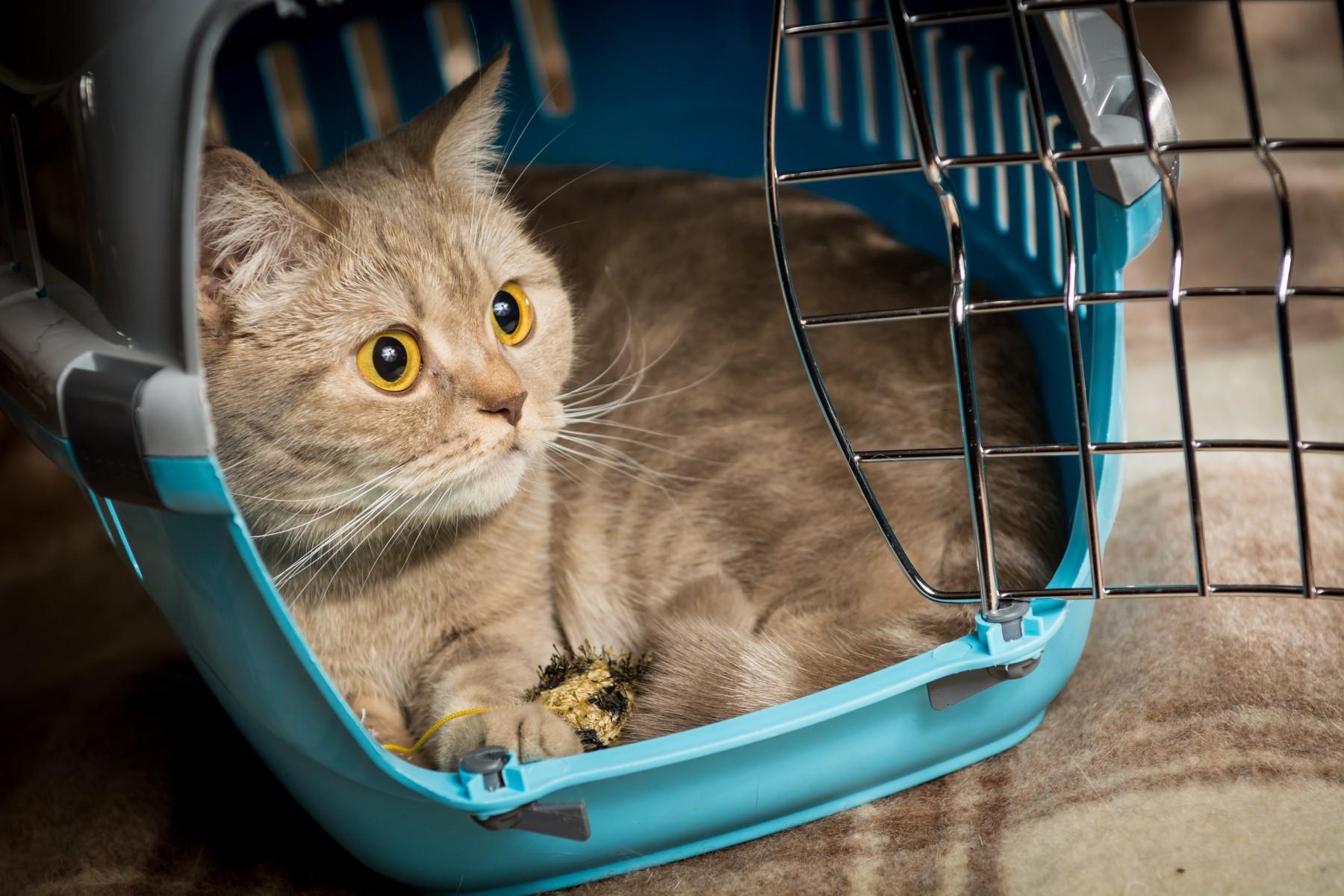 Cat in a travel case in Switzerland