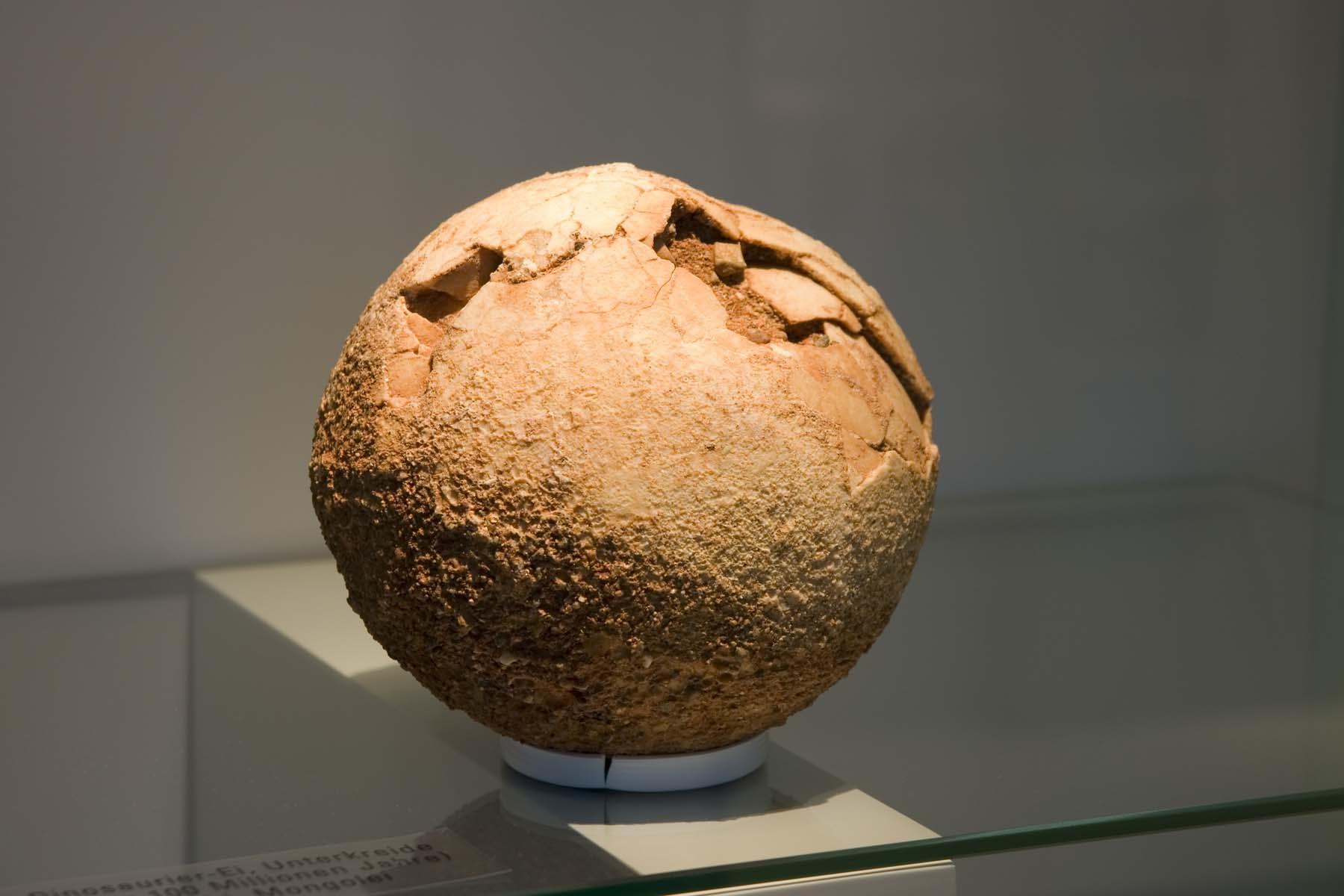 a dinosaur egg