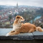 Pets in Switzerland