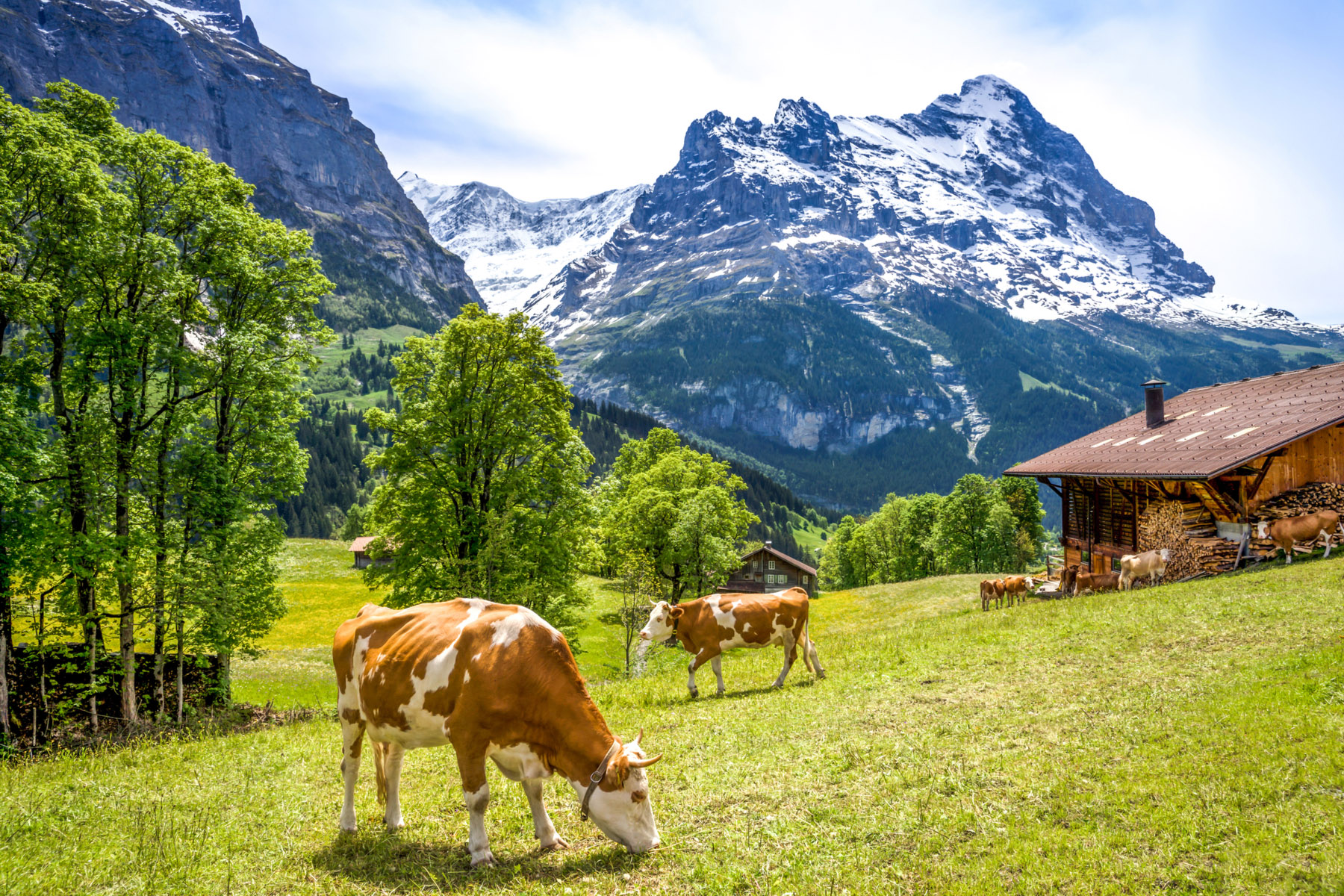 Dairy farm in Grindelwald