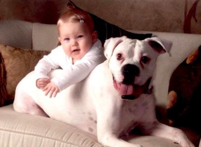 The ultimate 'inburgering' tool: dog or kid?