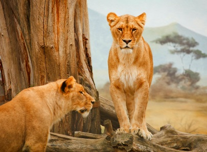 On the trail of the Big Five