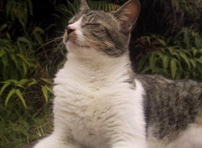 ExpatCH: Expat Cat