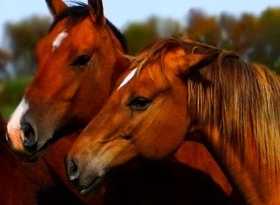 Opposite Ocean: Horse milk, drink up