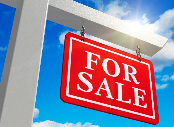 Jungle for sale: Dream property in Portugal