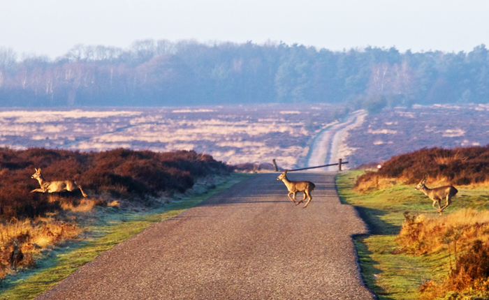 Top 10 places to visit in the Netherlands: De Hoge Veluwe National Park