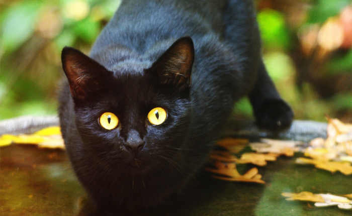 The truth about Halloween you didn't know: Halloween superstitions