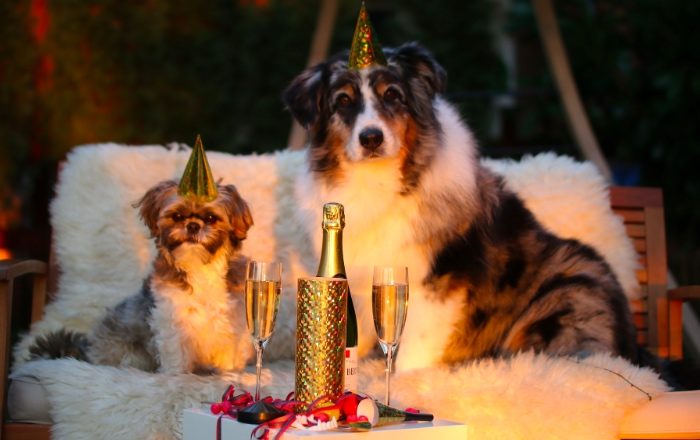Dogs on New Year's Eve