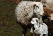 Turn shepherd for a day with Pastores por un Día