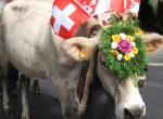 Swiss summer and autumn customs – wine, cows and foklore festivals