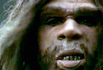 Neanderthals wouldn't have eaten their sprouts either