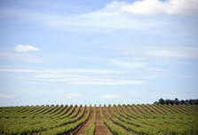 Spanish winemakers go green to save business