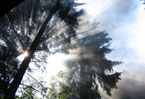 Germany's beloved forests threatened by environmental destruction