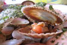 Scallop-lovers play Russian roulette with their lives