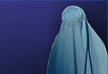 Burqa ban in Dutch playgrounds