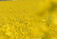 Biofuels may promote global warming