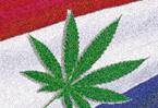 Not so soft: marijuana goes superpotent