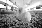 Jump in antibiotic resistance linked to food industry