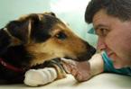 Drownings, mutilation: animal cruelty haunts the Balkans