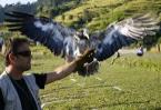 Nepal's endangered vultures take flight for new sport