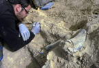 The painstaking search for Spain's Franco-era missing