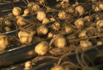 Video: Dutch news roundup, 23 January 2011