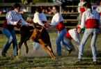 Bullfighting no longer a male bastion in Portugal