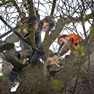Work to save Anne Frank tree starts