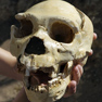 The first Europeans were cannibals