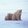 Global warming impacting Greenlanders' daily lives